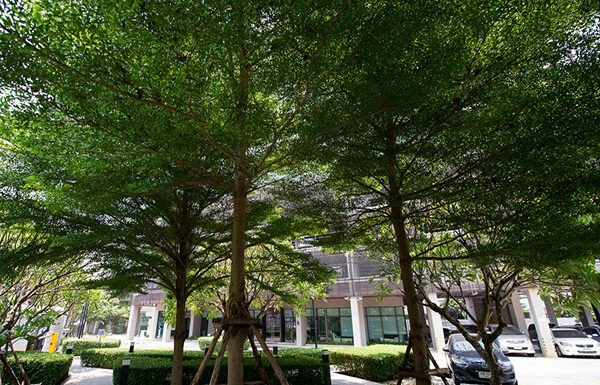 Ideo-Ladprao-5-Bangkok-condo-for-sale-garden